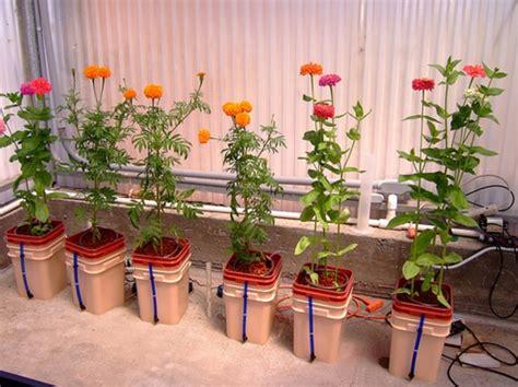 Pupuk Kcl Bunga Raya cara menanam tanaman hias dengan cara hidroponik