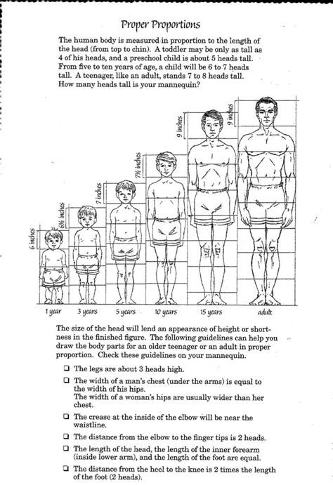 C Drawing Size by Image Result For Human Proportions Drawing