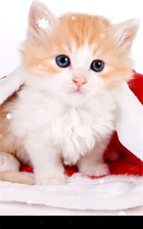 cat live wallpaper for pc christmas cat live wallpaper apk by kkpicture details