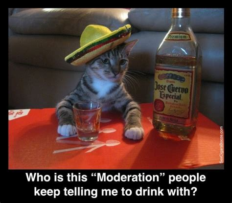 Jose Cuervo Meme - haha drinks and people on pinterest