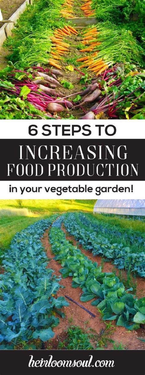 seven steps to an organic garden the basic steps to make anyone a green thumb gardener books 6 ways to increase food production in your organic