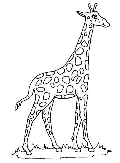 printable giraffe coloring pages coloring me