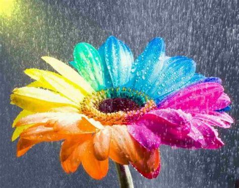 Colourful Stuff 20 colorful flowers 20 pics