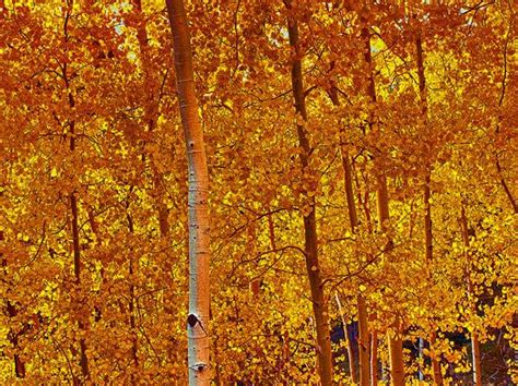fall colors in arizona best time for fall colors in arizona arizona tourism