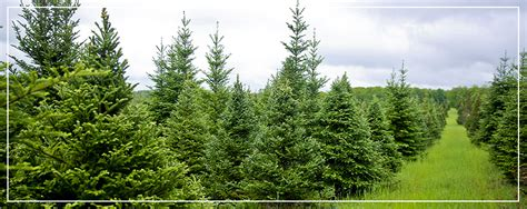 best 28 green garden christmas tree farm best 28 green