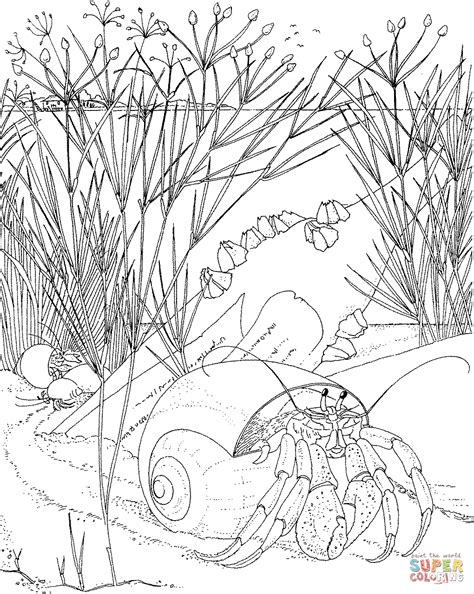 free coloring pages of nocturnal animals pictures of nocturnal animals coloring home