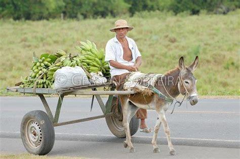portal  professor animais como meio de transportes