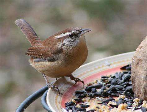 discover birds tennessee birds