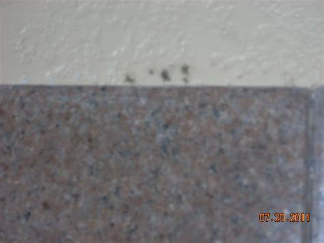 Mold Shower Wall by Mold On Shower Wall Picture Of Travelodge Galveston