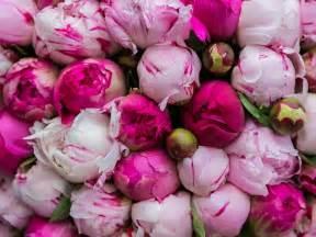 Hydrangea Wedding Bouquet 5 Spring Wedding Flowers You Ll Love Siobhandonovan Com
