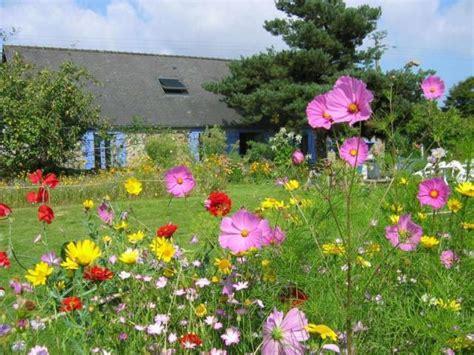 Uk Garden Flowers Create A Flower Meadow With Flore Seed Mixes Cox Garden Designs