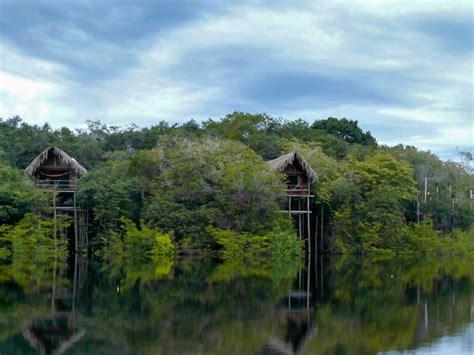 the korowai live in 50 metre tree houses as an