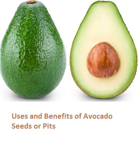 fruit with seeds or pits uses and benefits of avocado butter fruit seeds or pits