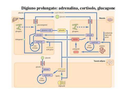 albumina bassa alimentazione alimentazione digiuno