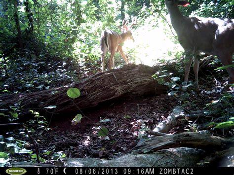 backyard wildlife camera backyard wildlife camera 100 backyard wildlife camera