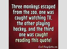 Three monkeys escaped from the zoo, one was caught ... Funniest Moments In Television