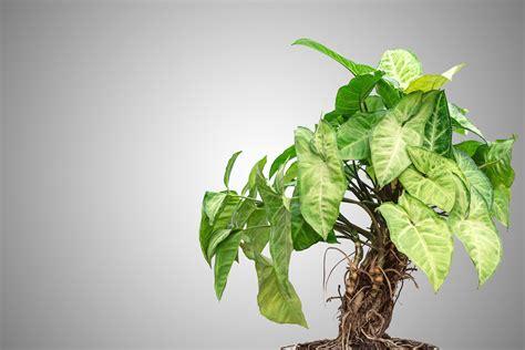 pianta da interno 9 piante resistono a tutto fito