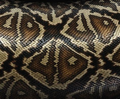 pin texture snake pictures reptiles skin pattern animals wallpaper on snake print predator and prey snake print and predator