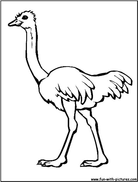 ostrich clipart coloring page pencil and in color