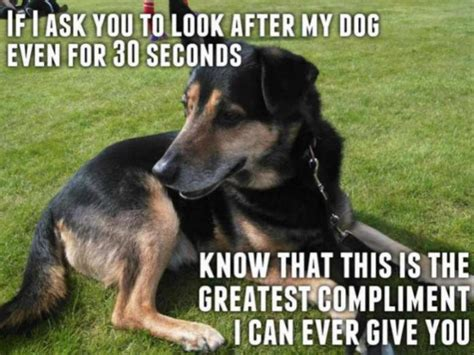Funny German Shepherd Memes - funny gsd memes page 4 german shepherd dog forums