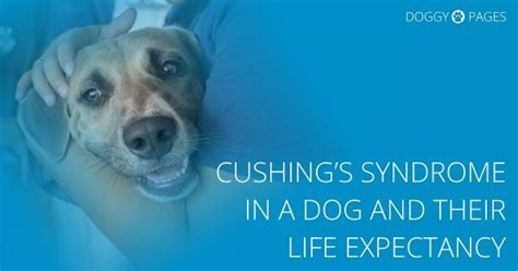 cushings in dogs our health archives