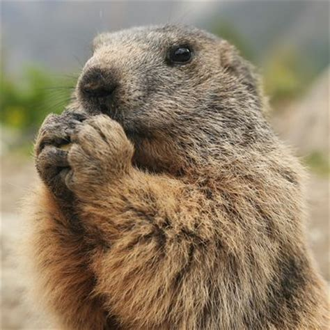 everyday is groundhog day meaning tongue definition and exles