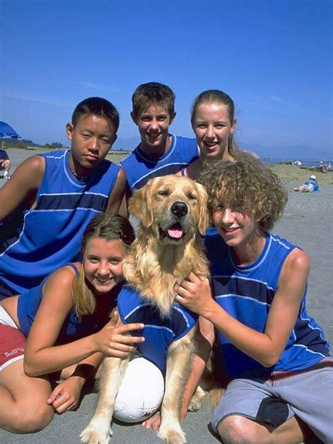 golden retriever air bud 170 best images about air bud and buddies on bud and the buddies