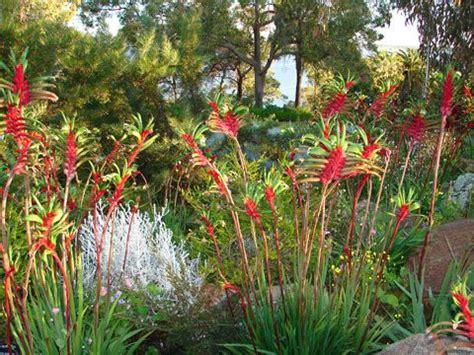 91 Best Native Gardens Images On Pinterest Decks Flowers In Australian Gardens