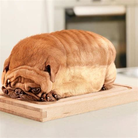 pug bread loaf that looks like pug that looks like a loaf of bread car tuning the loaf of bread that looks like a pug cooking pet themed food