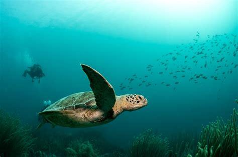 bonaire dive bonaire dive trip report underwater photography workshop