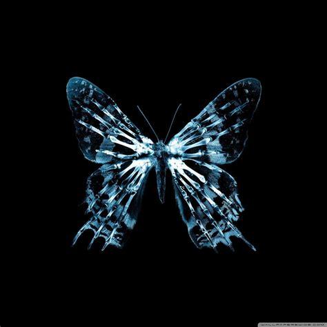 butterfly  ray  hd desktop wallpaper   ultra hd tv