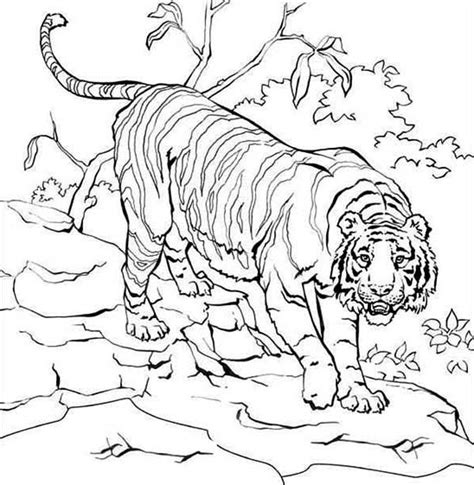coloring pages siberian tiger free tigers roaring coloring pages