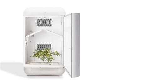 seedo home cultivator  indoor growing easy