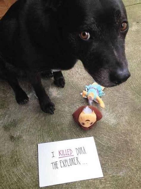 Dog Shaming Meme - guilty dog on tumblr