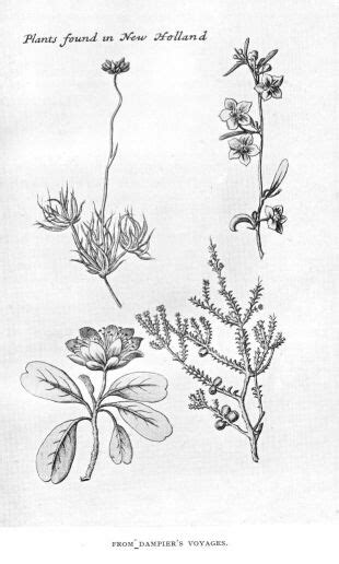coloring pages of australian flowers byte 25 discovery the set sail william