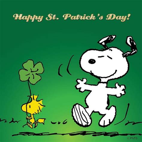 Happy St Patricks Day Meme - 17 best images about holidazes on pinterest spooky house