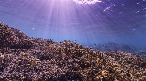 Watch Chasing Coral 2017 Netflix Uk Film Review Chasing Coral Vodzilla Co