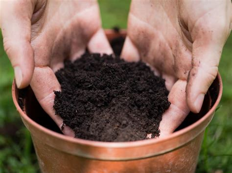 difference between potting soil and garden soil