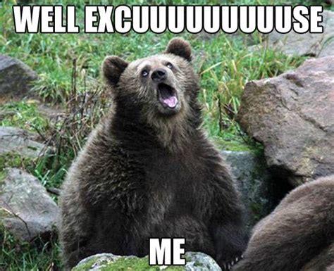 Funny Bear Meme - 67 best images about bear humor on pinterest