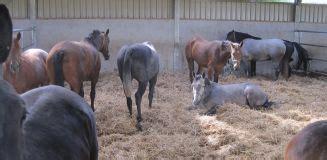 hear stal 2015 home equine fertility centre