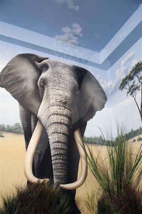 elephant wall mural safari playroom wall mural curtis stokes