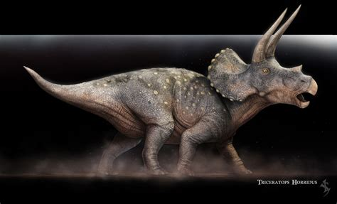 triceratops horridus  behance