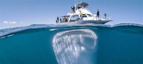 world largest fishing boat incredible photo of world s largest fish under a boat