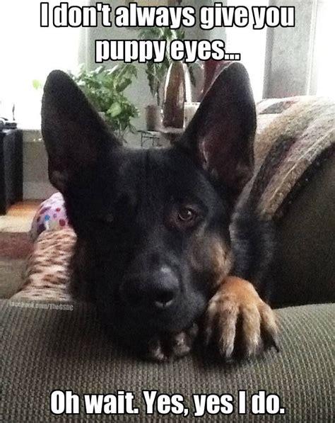 german shepherd puppies ohio best 20 puppy ideas on