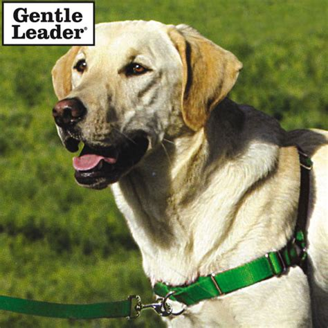 gentle leader harness heartland america product no longer available