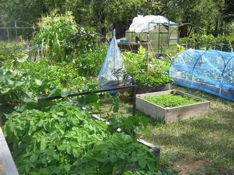 how to plant a vegetable garden in your backyard 101