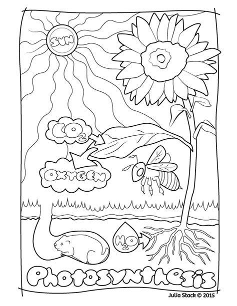 Photosynthesis Coloring Worksheet Photos Getadating Photosynthesis Coloring Pages