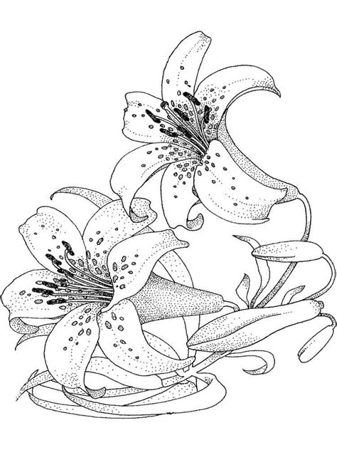 coloring pictures of lily flowers lily flower coloring pages download and print lily flower