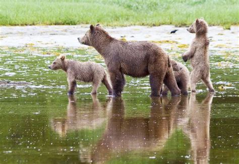 best places to spot wildlife in british columbia travel