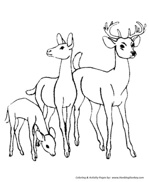 Deer Family Coloring Page | animal family colouring pages